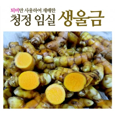 생울금(특) 5kg